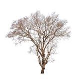 Alter und toter Baum Lizenzfreies Stockfoto