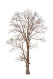 Alter und toter Baum Lizenzfreie Stockbilder