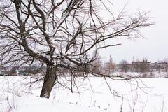 Alter verwelkter Baum und alte ruinierte Festung im Abstand im Winter Lizenzfreie Stockbilder