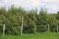 Alter verwitterter Zaun und Apfelbäume Stockfotografie