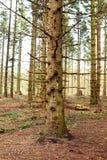 Alter Wald Lizenzfreie Stockbilder