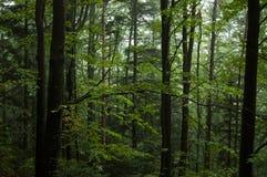 Alter Wald lizenzfreie stockfotografie
