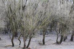 Alter Wald stockfoto