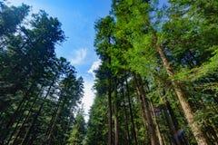 Alter Wald im Jiuzhaigou Lizenzfreie Stockfotos
