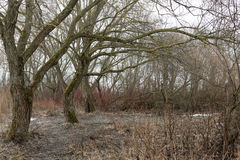 Alter Wald ist trocken und dicht stockbild