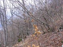 Alter Wald nahe Grza Stockfotos