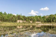 Alter Waldsee, grüne Bäume, trockene Schilfe an der Dämmerung Lizenzfreies Stockfoto