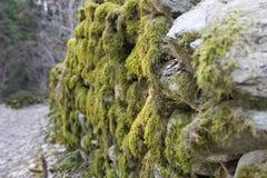 Alter Waldweg in den Alpen Moosige alte Steinwände Stockfotografie