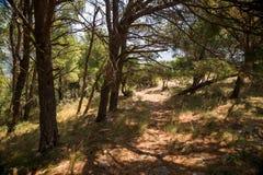Alter Weg durch den Koniferenwald zum alten verlassenen Fort von Sutomore-Dorf Stockfoto