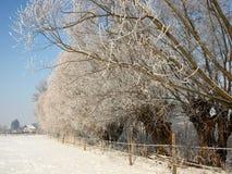 Alter Weidenbaum in der Gasse nahe den schneebedeckten Weiden lizenzfreie stockfotos