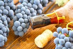 Alter Wein und junge Traube stockbild
