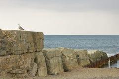 Alter Wellenbrecher und Seemöwe Stockfoto