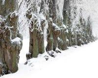 Alter Winter der Bäume I Stockfotografie