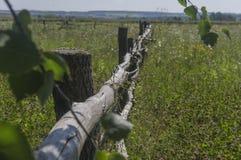 Alter Zaun auf einer Sommerwiese Stockfoto