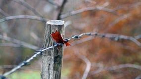 Alter Zaun auf unscharfem Hintergrund und Herbstblatt fing auf Zaun Lizenzfreies Stockbild
