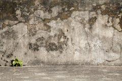 Alter Zementwandhintergrund mit wenigem Baum in der Ecke unten Lizenzfreie Stockfotografie