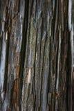 Alter zerbröckelnder Baum der Beschaffenheit Lizenzfreie Stockbilder