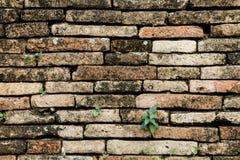 Alter Ziegelstein in der Wand Stockfoto