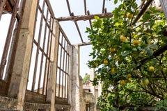 Alter Zitronen-Bauernhof Lizenzfreie Stockfotografie