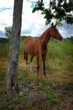 Altere el caballo real fotos de archivo libres de regalías