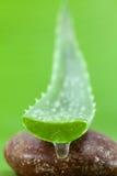 Alternativ aloe vera för hudomsorg stelnar droppe och aloe vera på brunnsortst Royaltyfri Foto