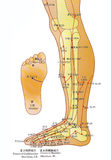 alternativ diagrammedicin för akupunktur Arkivfoto
