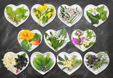 Alternativ medicin med medicinalväxter Royaltyfri Fotografi