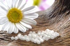 Alternativ medicin med växt- preventivpillerar Royaltyfri Bild