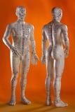 alternativ medicinmodell för akupunktur Royaltyfria Foton