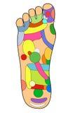 A alternativa tradicional cura, acupuntura - esquema do pé Imagens de Stock Royalty Free