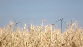 Alternative electrical energy created by windmills in fields of wheat. Close up stock footage