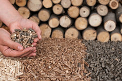 Alternative Energy. Different kind of pellets- oak, pine,sunflower, in female hands- selective fokus on the hand and the heap Stock Photo