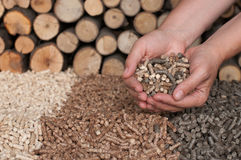 Alternative Energy. Different kind of pellets- oak, pine,sunflower, in female hands- selective focus on the hand and the heap Stock Images