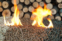 Alternative Energy. Different kind of pellets- oak, pine,sunflower, in flames. Selective focus on the heap Stock Images