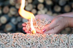 Alternative energy. Pellets in female hands and flames-selective focus on the heap Stock Photo