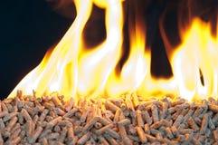 Alternative energy. Oak Pellets in flames on a black background Stock Photos