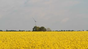 Alternative Energy Mix. Alternative energy concept footage: Wind energy generators built among rapeseed fields. oil is used as bio-fuel, Wind energy used to stock video footage