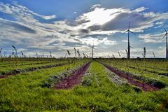 Landscape of Wind turbines and plantation of cherry trees after bloom against blue sky after the rain. royalty free stock image