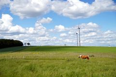 Healthy Horse In Pasture. Wind turbines in green field landscape against blue sky. stock photography