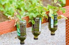 Alternative gardening Stock Image