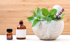 Alternative health care fresh herbs basil ,sage ,rosemary, mint Royalty Free Stock Image