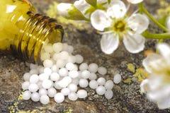 Alternative herbal medicine Stock Photography