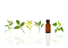 Alternative Herbs for Health. Herb leaf sprigs of hyssop, chocolate mint, golden marjoram, sage, and bergamot and an essential oil brown glasss bottle, over royalty free stock photography