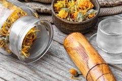 Alternative medicinal calendula Royalty Free Stock Photos