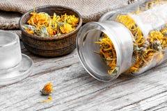 Alternative medicinal calendula Stock Photography