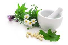 Alternative Medicine. Healing herbs in mortar. Alternative medicine concept Royalty Free Stock Photography