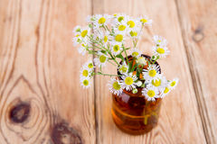 Alternative medicine concept - bottle with camomile Stock Photography