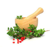 Alternative medicine - cowberry Royalty Free Stock Image