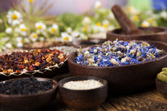 Alternative medicine, dried herbs background Stock Image