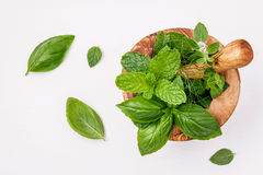Alternative medicine fresh herbs in the wooden mortar . Food ing. Redients and seasoning basil, peppermint , dill and green mint  in a wooden mortar set up on Stock Photography